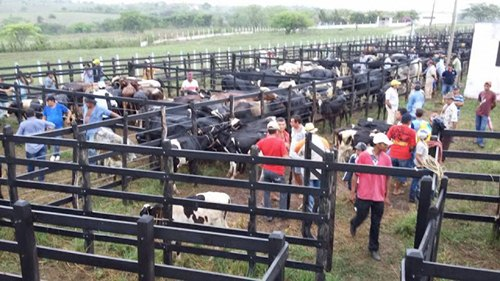 Mudança - Após interdição, feira de animais de João Alfredo passa a acontecer no Curral do Boiadeiro em Surubim-PE 4 - blog negocios e informes