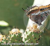 borboleta-e-cacto